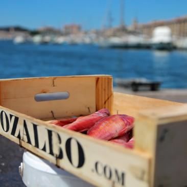 Frischer Fisch im Hafen von Marseille