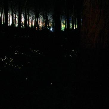 Glühwürmchen in Marina di Bibbona