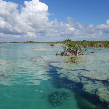 Unterwasser-Formationen (Stalagmiten und Stalaktiten) in Bacalar
