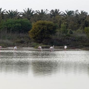 Sogar Flamingos