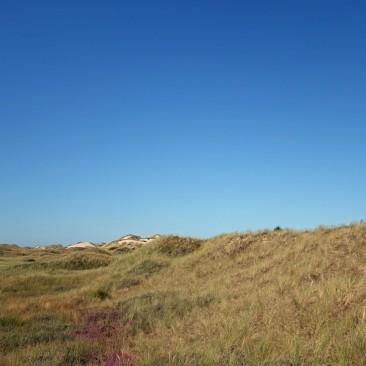 Schöne Dünenlandschaft, zum Strand ist es allerdings ein weiter Weg