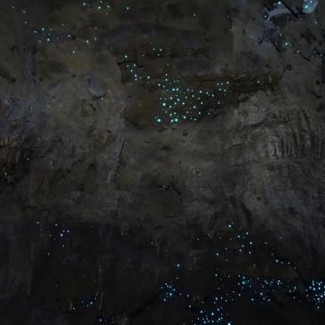 Hier leben Glow Worms, nicht zu verwechseln mit der europäischen Art